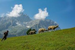 3. Shepherding through Shedur meadows @ Enroute Nichnai_
